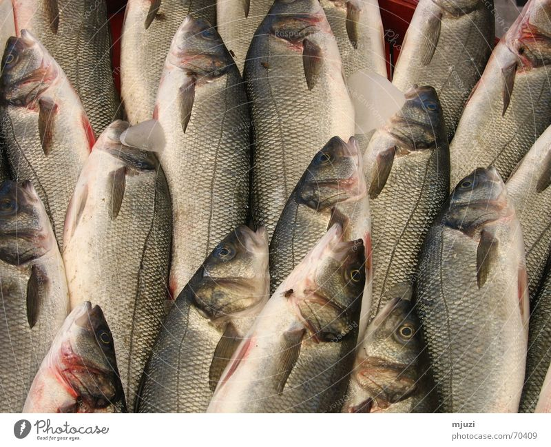fish Fish market Specialities Beaded Fresh Chilled Fishing rod Freshwater Barn Markets fish ice fresh fish Fly