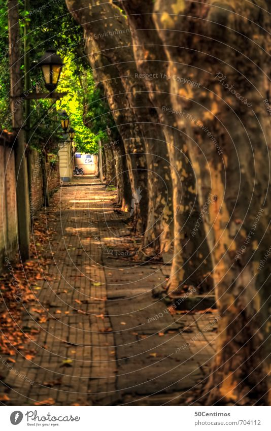 Walkway under trees - Ale Vacation & Travel Tourism Trip Far-off places Summer Summer vacation Plant Tree Uruguay Small Town Old town Pedestrian Lanes & trails