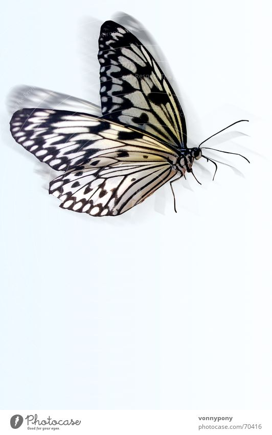 Sky White Blue Animal Flying Butterfly Easy Judder
