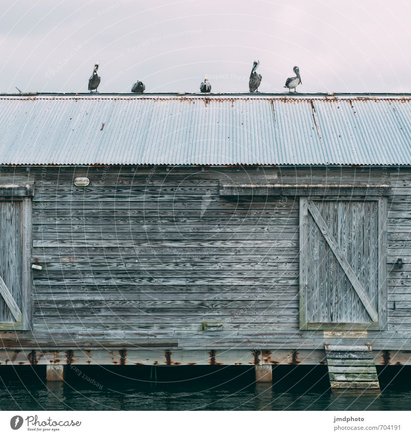 5 pelicans Vacation & Travel Tourism Adventure Far-off places City trip Cruise Expedition Summer vacation House (Residential Structure) Environment Nature
