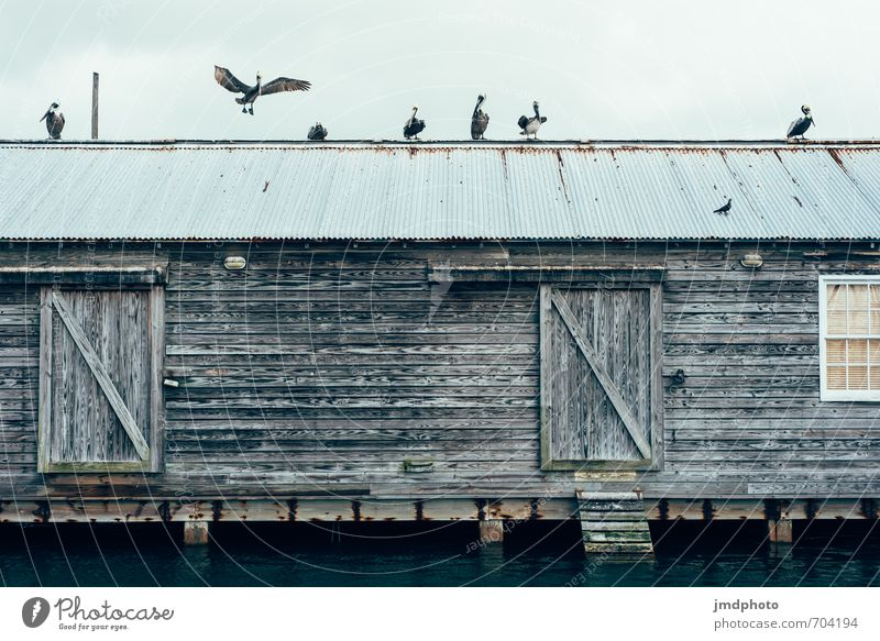 Pelicans on the roof Vacation & Travel Tourism Far-off places Cruise Summer vacation House (Residential Structure) Redecorate Environment Nature Hut Ruin