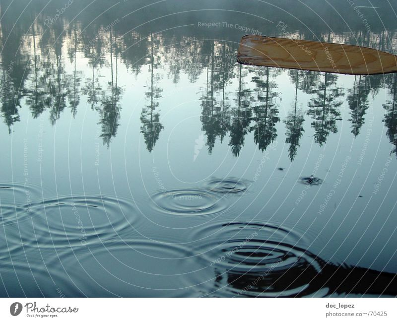 Water Tree Calm Lake Coast Drops of water Circle Lakeside Smooth Smoothness Finland Float in the water Paddle Sports Surface of water Water reflection
