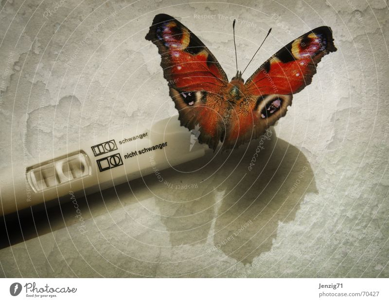 Strike! Pregnant Test result Butterfly Insect pregnancy test Attempt Browns Bright background Shadow Full-length Test object Experimental animal