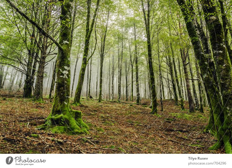 Forest Nature Beautiful A Royalty Free Stock Photo From Photocase