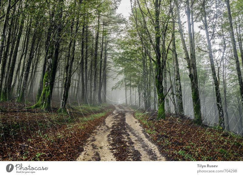 Road through the fogy forest Beautiful Sun Mountain Nature Tree Forest Places Street Lanes & trails Natural Brown Green Colour Peace wood inside Spain Europe