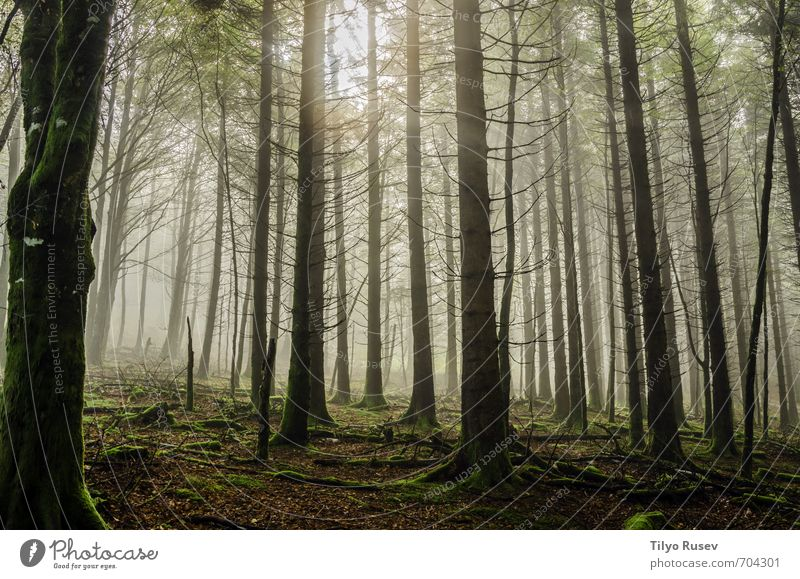 Mystic Forest Nature A Royalty Free Stock Photo From Photocase