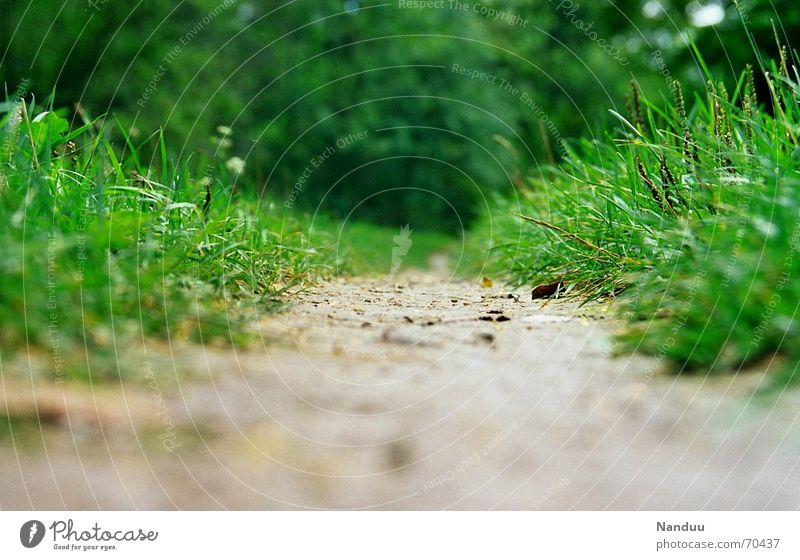 The way is the goal Beautiful Calm Far-off places Hiking Nature Grass Meadow Lanes & trails Going Large Small Wet Green Emotions Boredom Beginning End