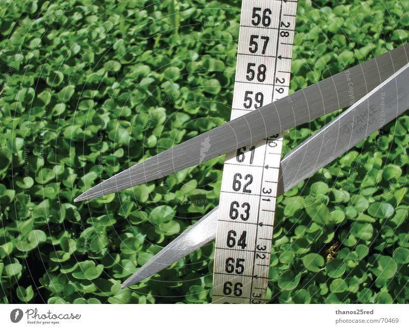 C U T Blow Clever measure measuring schissor freen grass idea tall small high