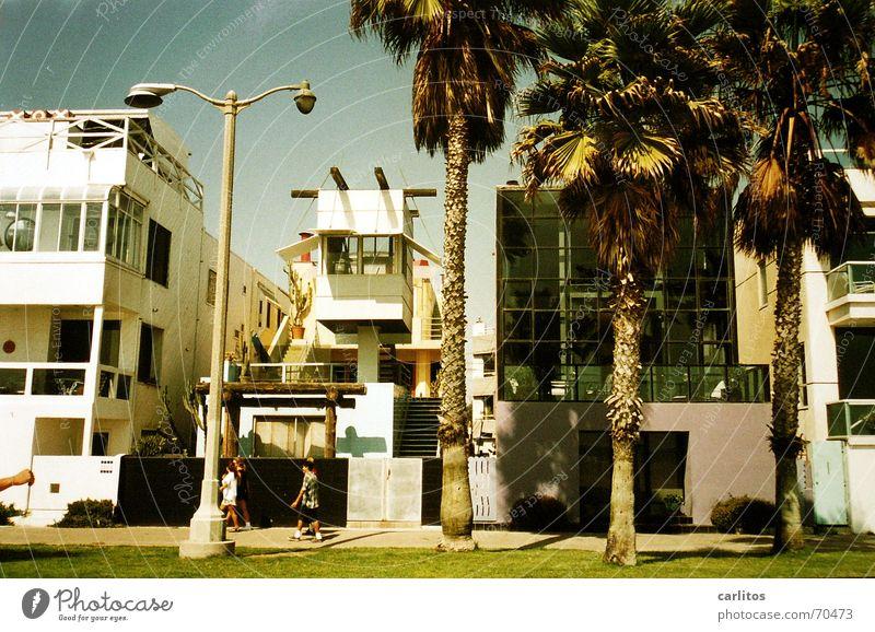 Beach Modern USA Palm tree California Los Angeles