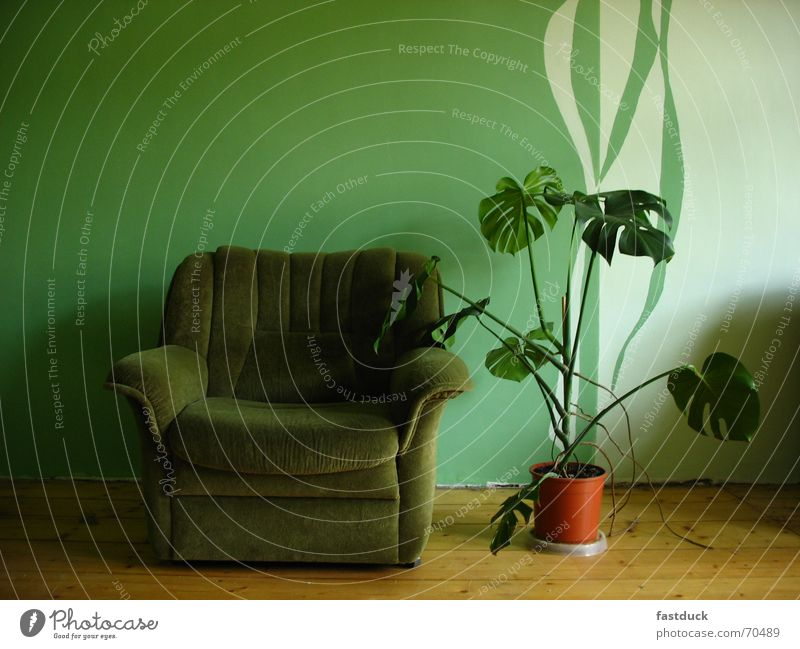 looking for green? Cloth Plant Flowerpot Wall (building) Parquet floor Empty Green Chair