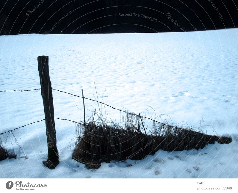 end of fence Fence Wood Winter Twilight Snow