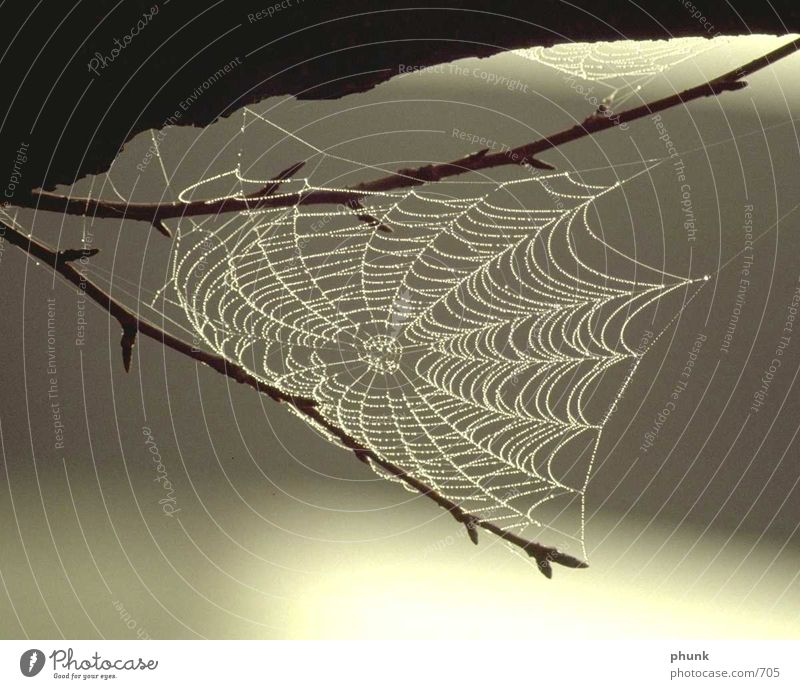 Spider's web complete Blur Back-light Caution Dangerous Perfect Dew Transport Concentrate filigree Net Rain Water