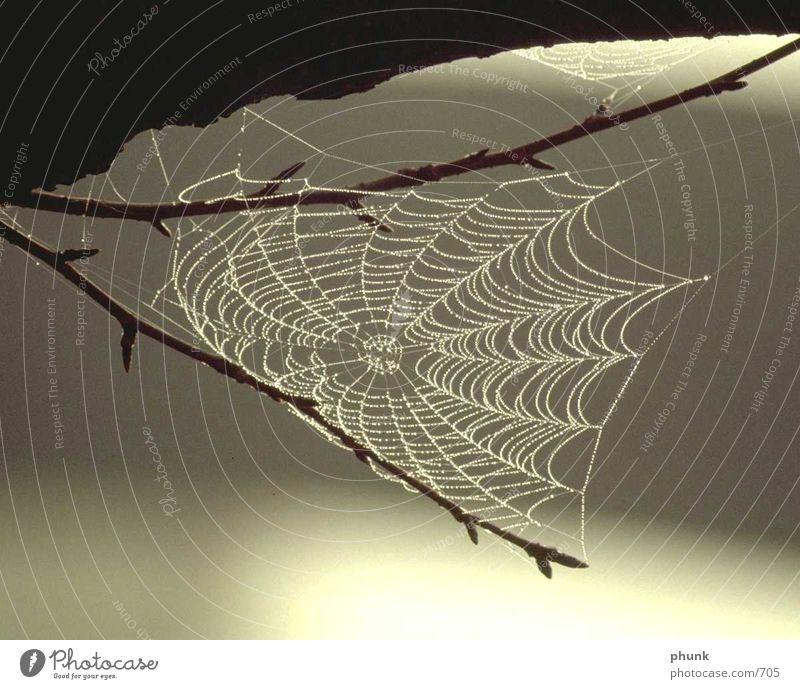 Water Rain Transport Dangerous Net Concentrate Dew Spider Caution Blur Perfect Spider's web