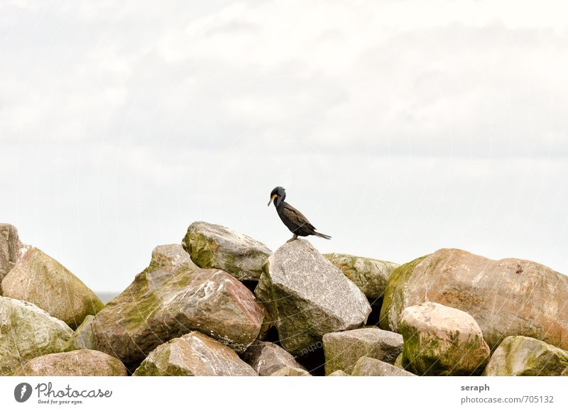 Cormorant Sky Ocean Animal Coast Stone Natural Rock Bird Wild Feather Wing Baltic Sea Footbridge Jetty Beak Break water