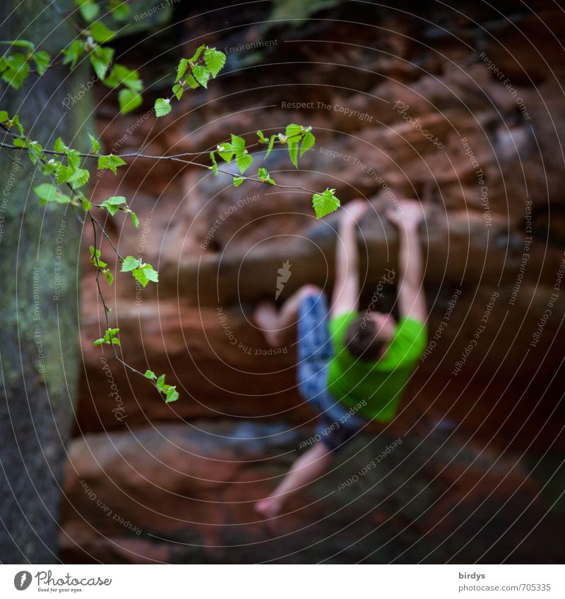 The way is the goal Climbing Mountaineering bum Free-climbing Free climber Young man Youth (Young adults) Body 1 Human being 18 - 30 years Adults Tree Leaf