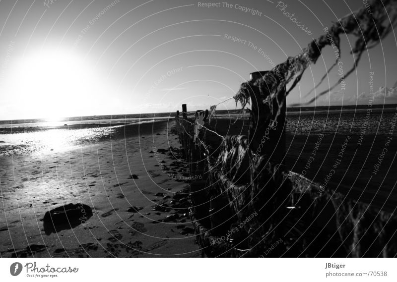 A breeze of seaweed and freedom Beach Ocean Sunset Fence Pole Low tide Algae Footprint Loneliness Calm Wire Exterior shot Black & white photo North Sea