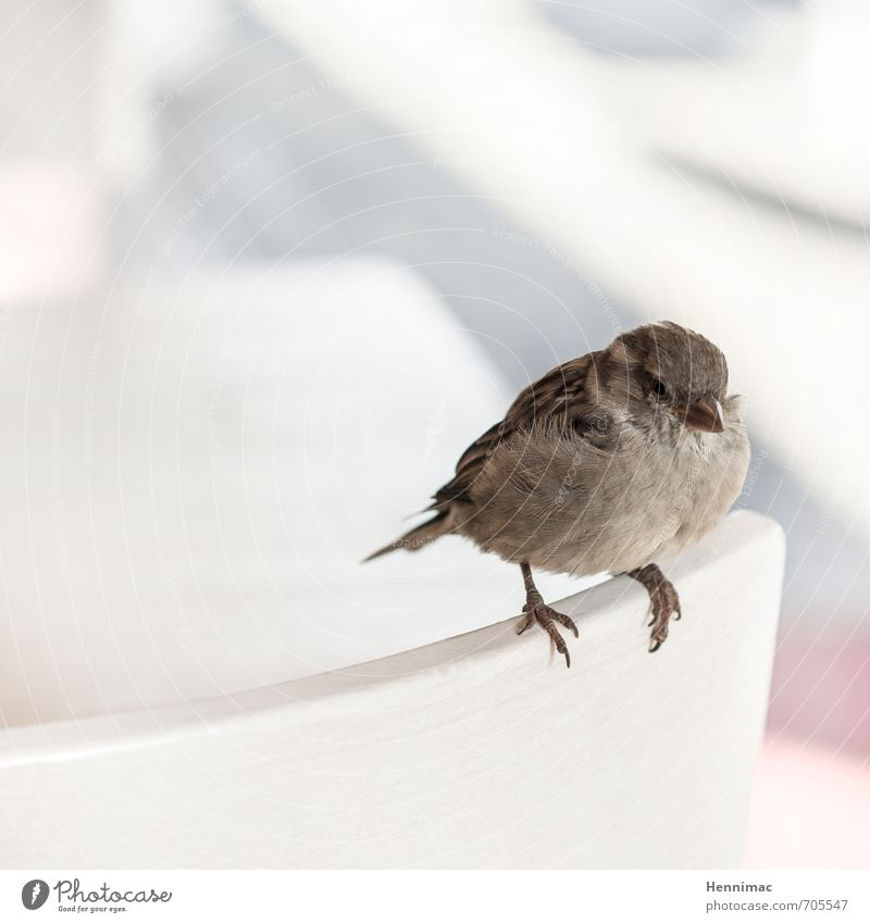 Nature Beautiful Loneliness Animal Gray Small Natural Brown Bird Contentment Sit Wild animal Wait Cute Soft Round