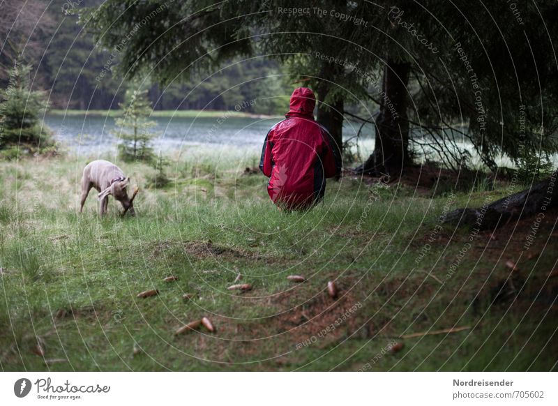 downpour Lifestyle Harmonious Relaxation Calm Meditation Trip Hiking Human being Woman Adults 1 Nature Water Bad weather Rain Tree Meadow Forest Lake