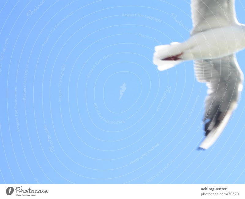 fly away Bird White Dream Sky blue Goodbye seagull Freedom Blue Feather Flying