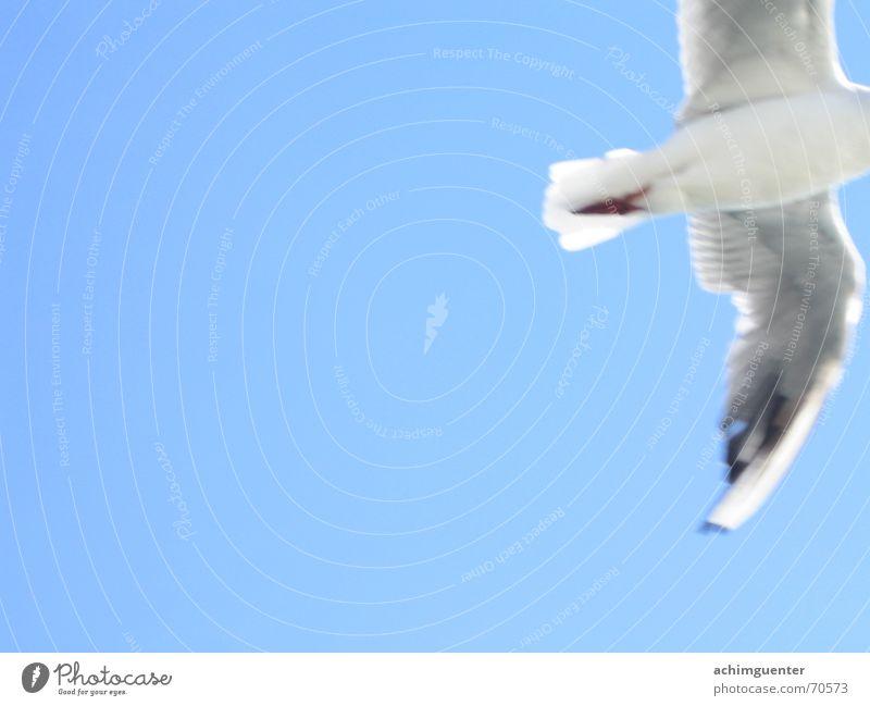Sky White Blue Freedom Dream Bird Flying Feather Goodbye Sky blue