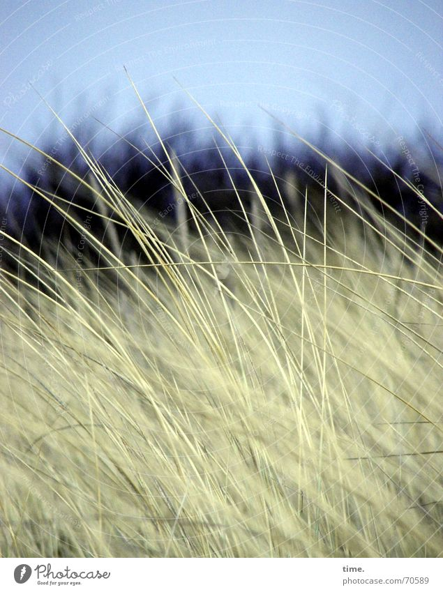 Nature Beautiful Beach Meadow Grass Movement Coast Environment Natural Dune Wilderness Language Natural phenomenon Lee Ahrenshoop Law of nature