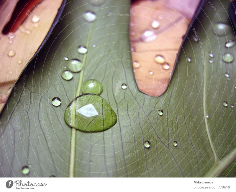 leaves Leaf Drops of water Tears Water Drinking water Dew Rain Plant Macro (Extreme close-up) Rachis Vessel Wet Damp Green Brown Limp Light Reflection Close-up
