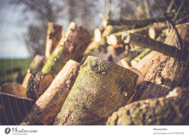new firewood Lumberjack Nature Agriculture Forestry Environment Landscape Spring Beautiful weather Tree Agricultural crop Wild plant Bavaria Wood