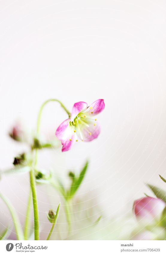 Nature Green Plant Flower Yellow Spring Pink Blossoming Delicate Spring fever