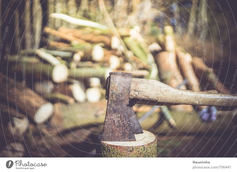 Axe in the forest Craftsperson Lumberjack Forest Nature Agriculture Forestry Craft (trade) Work break Environment Landscape Sun Spring Beautiful weather Tree