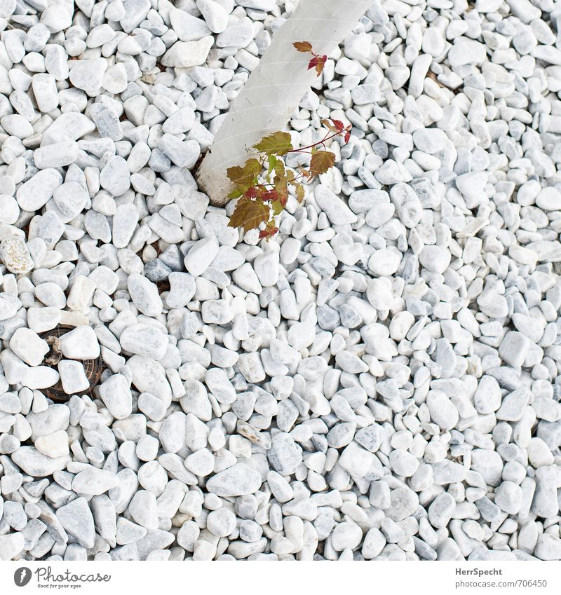 offspring | descent Plant Spring Tree Leaf Foliage plant Garden Park Stone Wood Small Green White Spring fever Brave Unwavering offshoot Sprout Growth Expel