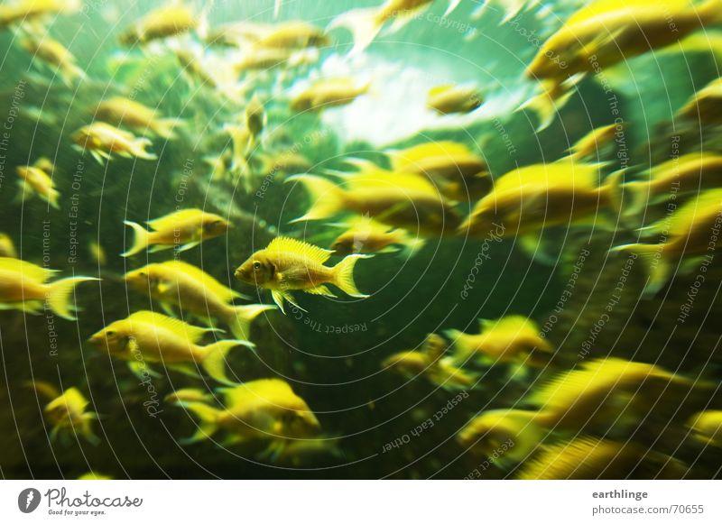 Water Green Yellow Movement Fish Zoo Dynamics Aquarium Chaos Museum Water wings Landscape format Alternating