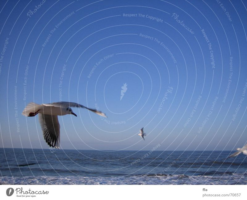 low-altitude flight Seagull Bird Ocean Beach Foam Waves Clouds Animal White crest Blue Water Sky Flying Salt