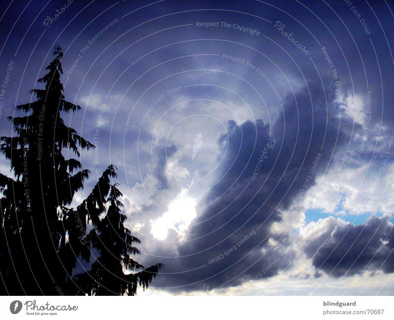 Sky Tree Sun Blue Summer Clouds Dark Rain Wind Fir tree Thunder and lightning Storm Cyan Bad weather Raincloud