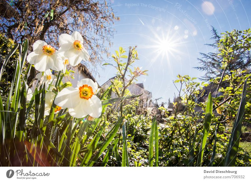spring weather Harmonious Relaxation Calm Summer Summer vacation Nature Plant Animal Cloudless sky Spring Beautiful weather Warmth Tree Flower Grass Bushes Leaf
