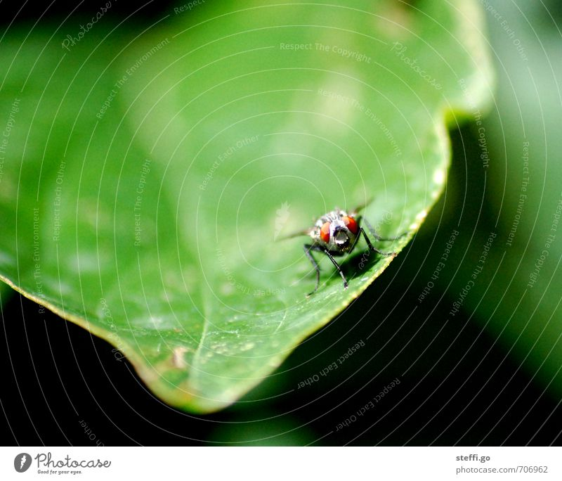 moin! Plant Animal Fly Animal face Wing Insect 1 Observe Exotic Wild Discover Expectation Curiosity Freedom Green Leaf Rachis Flying Eyes Calm Serene Anxious
