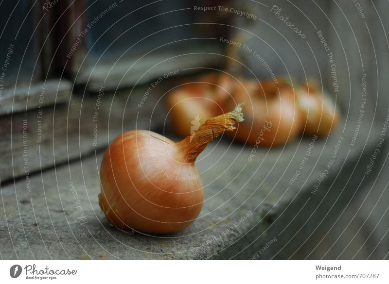 onion fish Onion Vegetable Autumn Healthy Eating Organic produce Shallow depth of field Window board Simple Lie Deserted Wooden window Old Brownish Foreground