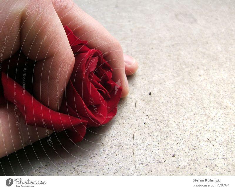 Hand Red Skin Fingers Rose Thorn Rose leaves