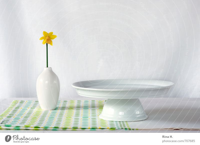 Still with daffodil Crockery Plate Living or residing Flower Blossoming Esthetic Fresh Bright Yellow Green White Spring fever Tablecloth Still Life Narcissus