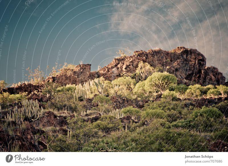 San Andrés / Tenerife XXXI Environment Nature Landscape Plant Bushes Rock Mountain Peak Island Esthetic Desert Desert plant Spain Canaries South