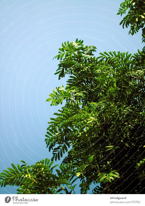 My friend the tree Green Cyan Tree Plant Blue Branch leave Life Nature
