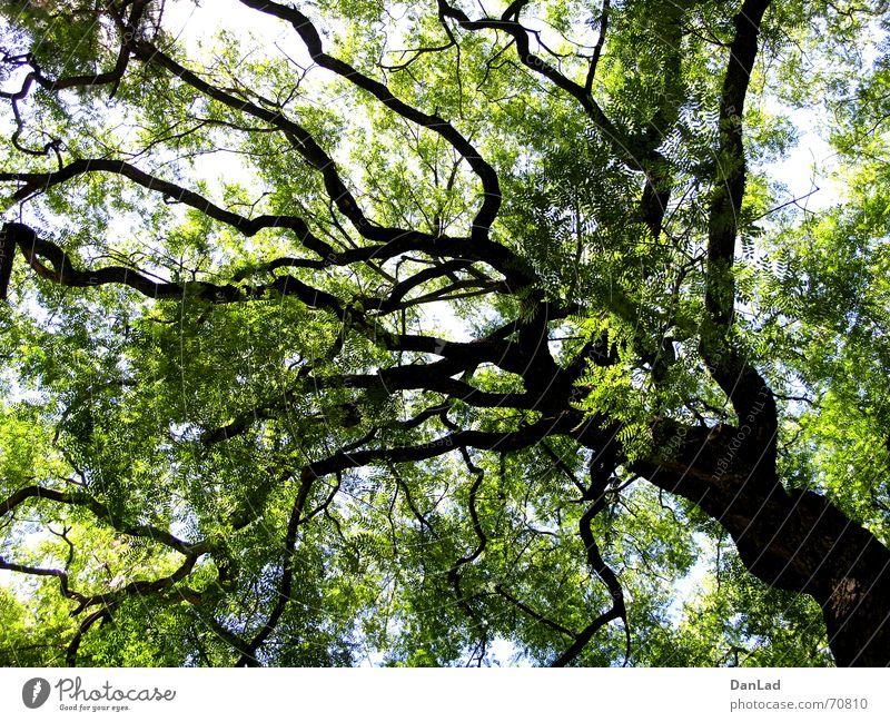 Nature Sky Tree Green Leaf Far-off places Garden Large Tall Portugal Lisbon Botanical gardens