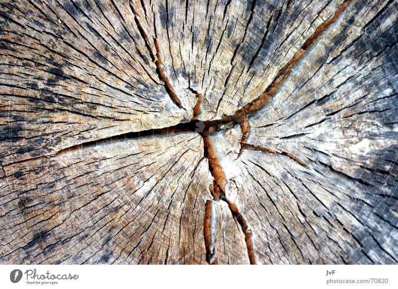 woodboow Wood Tree Dry Old Nature Wrinkles Furrow