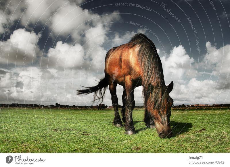 Lawn mower. Lawnmower Horse Friesland district Animal Meadow Pasture Clouds Pet Sky