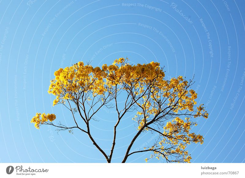 Nature Yellow Brazil Blue sky