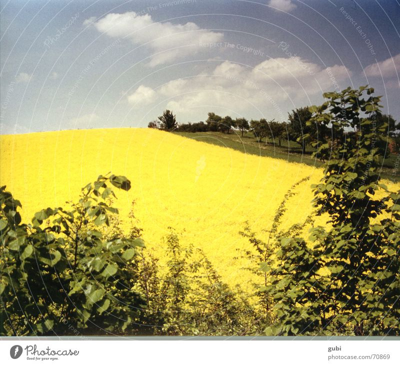 Nature Sky Summer Yellow Relaxation Happy Landscape Field Germany