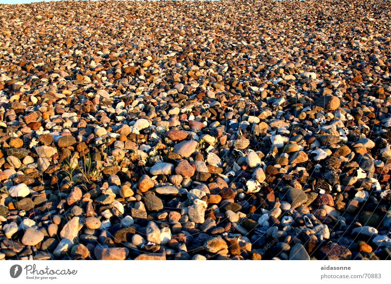 Beach Stone Round Infinity Baltic Sea Many Algae Pebble Gravel beach Stone block Pebble beach Heiligendamm Uneven