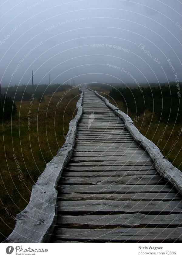 From afar I come here Far-off places Fog Wood Green Czech Republic Footbridge Marsh Bushes Bridge Sky