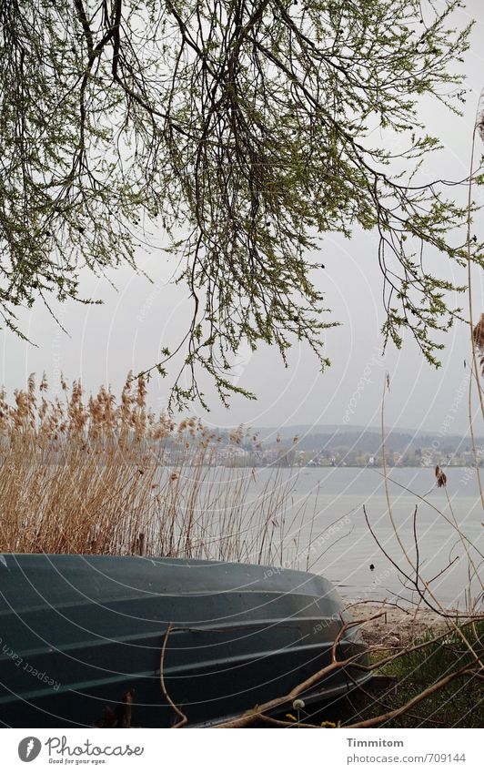 Sky Nature Water Tree Calm Environment Emotions Natural Lake Watercraft Lie Trip Simple Lakeside Common Reed Lake Constance
