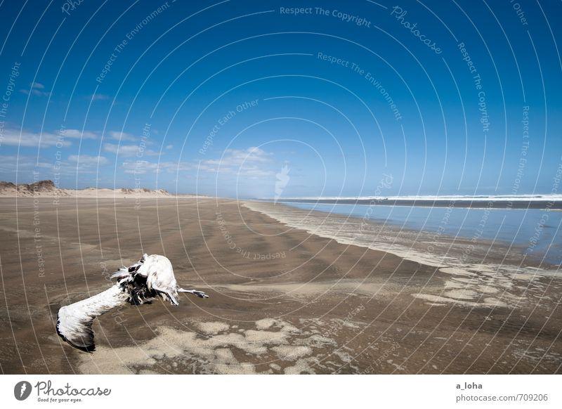 Sky Nature Water Summer Ocean Landscape Clouds Animal Far-off places Beach Warmth Coast Death Sand Horizon Bird