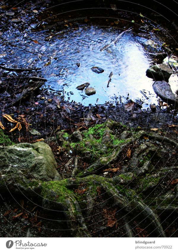 Also... Brook Runlet Wet Damp Puddle Flow Flat Wood Flotsam and jetsam Reflection Traffic jam Plant Waves Dream Root Thin Romance Idyll Calm Fairy tale